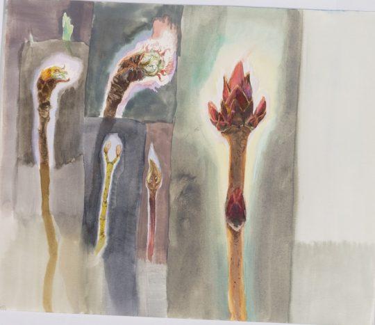 Pupeny - akvarel, 20 x 25 cm, 2014