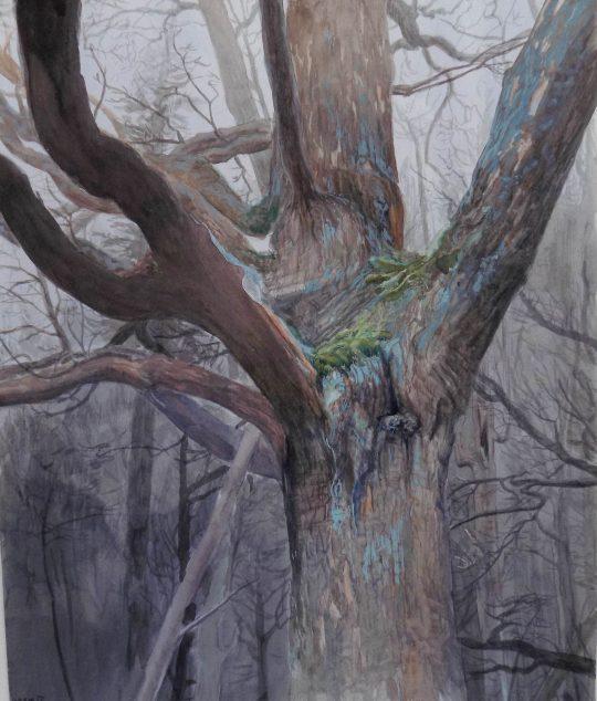 Javor, akvarel, 40 x 35 cm, 2014