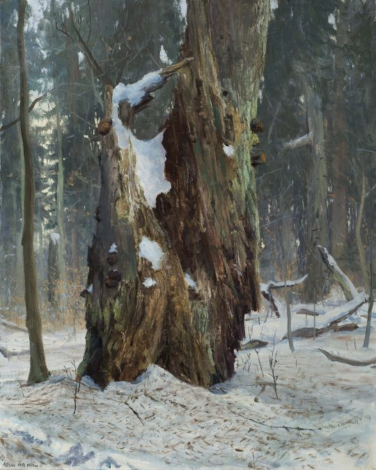 Prales - Polom, olej, plátno, 40 x 50 cm, 2017