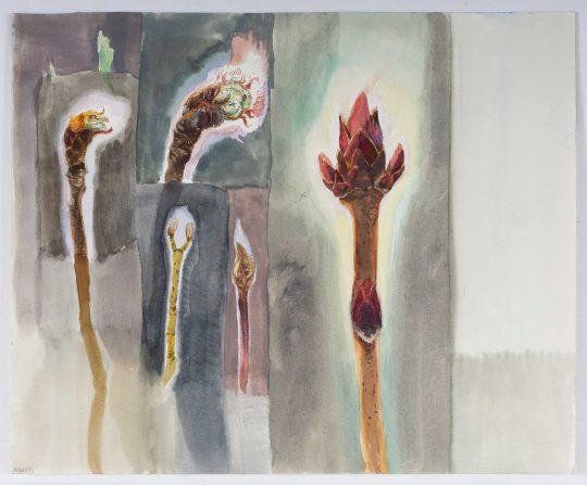 Pupeny, akvarel, 20 x 25 cm, 2014