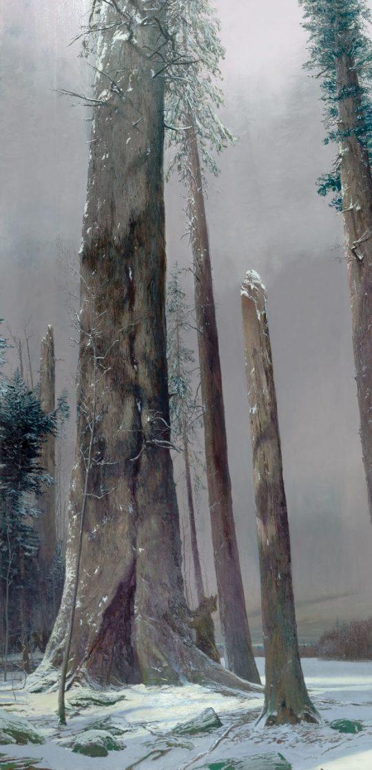 Jedle, olej, plátno, 300 x 140 cm, 2014
