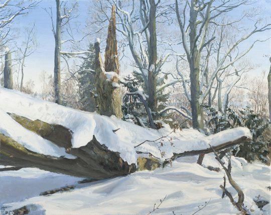 Mladějov - Tis - Buk, olej, plátno, 40 x 50 cm, 2017