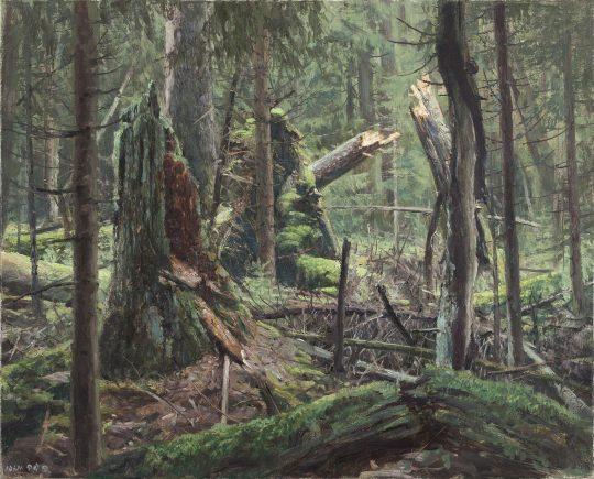 Rašeliniště na Skřítku 2, olej na plátně, 40x50cm, 2017
