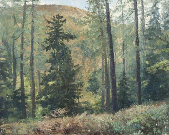 Modřínový vrch, olej na plátně, 40x50cm, 2017