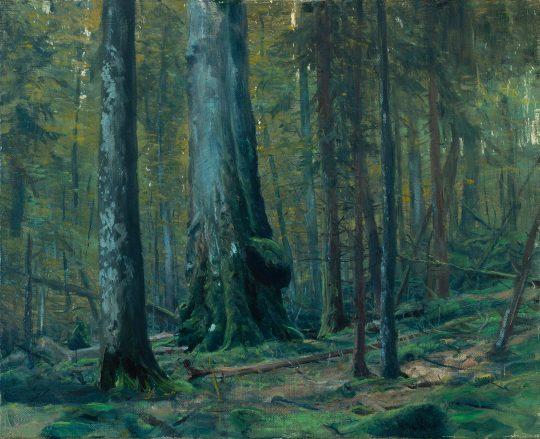 Prales u Českých Žlebů 1, olej na plátně, 40x50cm, 2019
