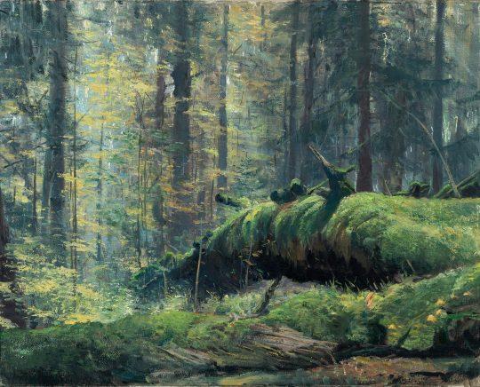 Prales u Českých Žlebů 2, olej na plátně, 40x50cm, 2019