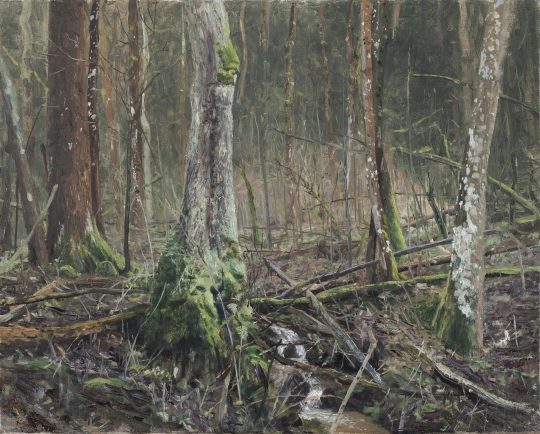 Račinka - Žárová, olej na plátně, 40x50cm, 2018