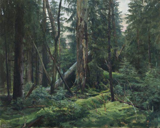 Rašeliniště na Skřítku 1, olej na plátně, 40x50cm, 2017